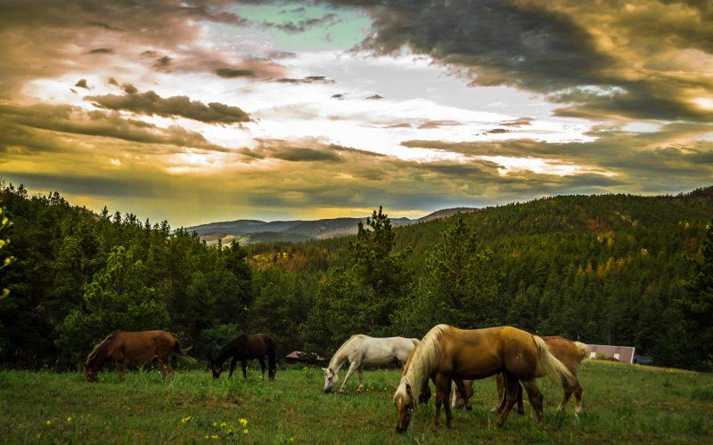 Calming the Wild Horses